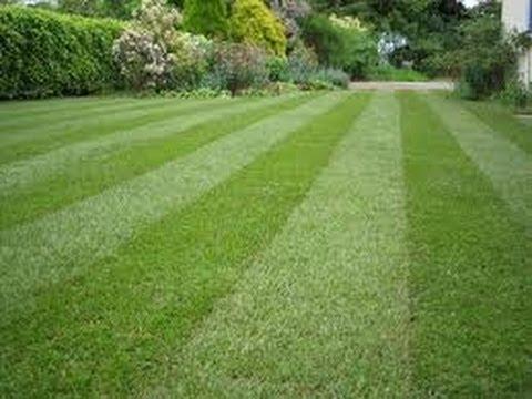 BFHA clean sweep lawn